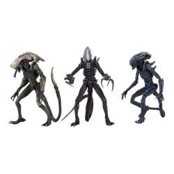 Alien vs Predator Set of 3...
